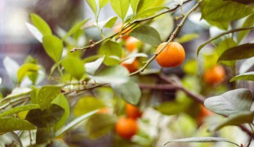 「bear fruit」の意味と使い方【例文でわかりやすく解説】